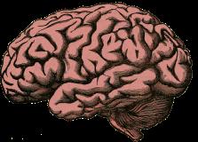 Le cerveau: pour réfléchir avant d'agir